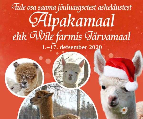 Wile Farm. Jõulud Alpakamaal 2020